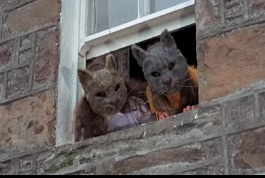 wicker man cats